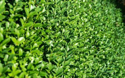 What is the Fastest Growing Hedge?